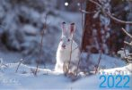 Niclas Nordlund kalender 2022 framsida